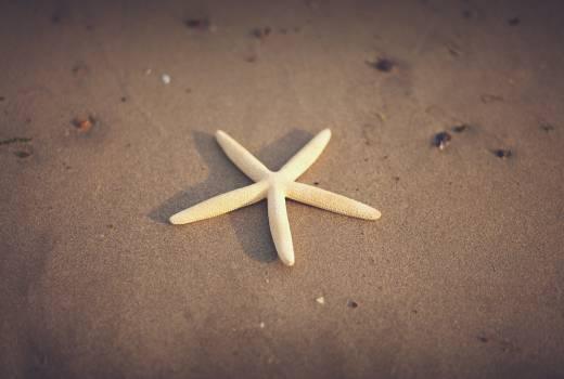 starfish beach sand Free Photo