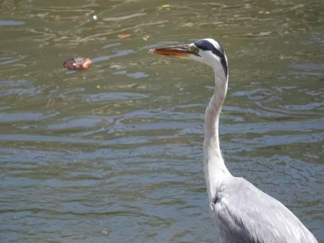 Bird Wading bird Aquatic bird Free Photo