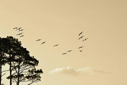 birds animals flying Free Photo