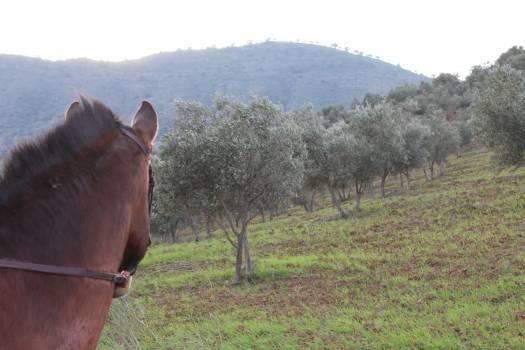 Horse Farm Equine Free Photo