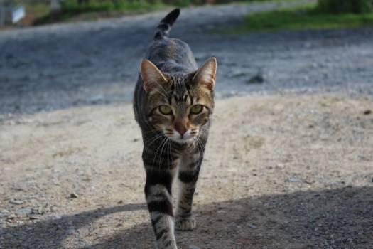 Cat Feline Domestic cat #240160