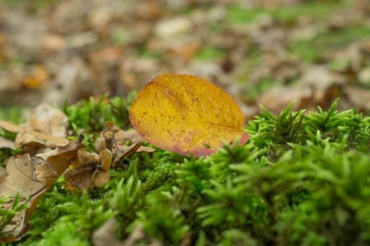 leaf grass plants Free Photo