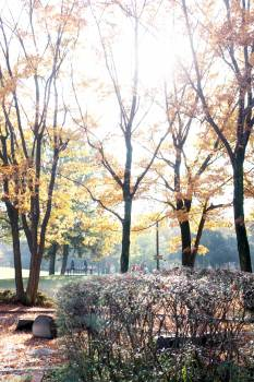 Tree Autumn Landscape #240478