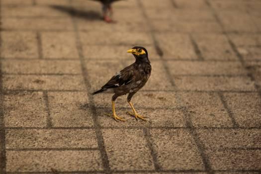 Starling Bird Wildlife Free Photo