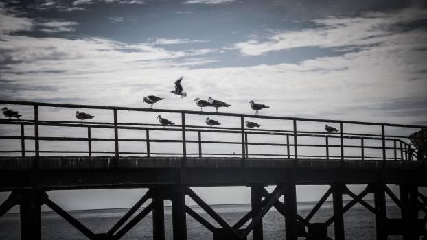 bridge ocean sea Free Photo