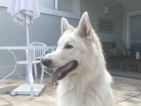 Dog Canine Domestic animal #241202