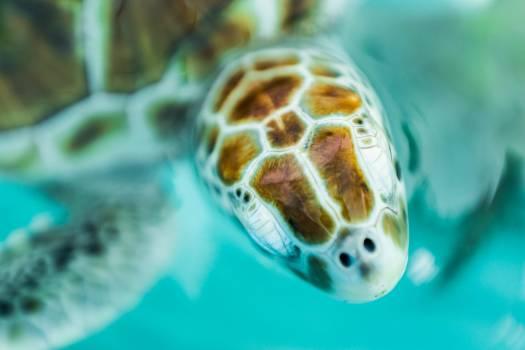 Turtle Sea turtle #241237