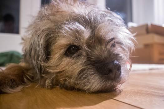 Terrier Hunting dog Dog #241266