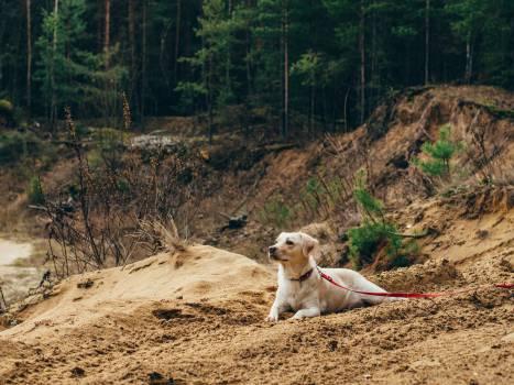 dog pet leash #24131