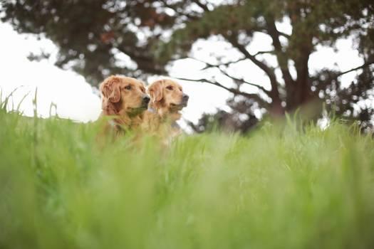 Spaniel Sporting dog Dog Free Photo