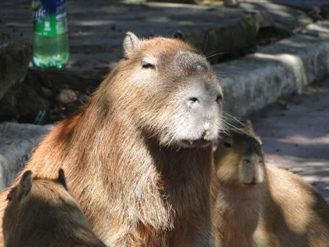 Carnivore Predator Bear Free Photo