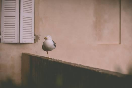 seagull bird animals #24167