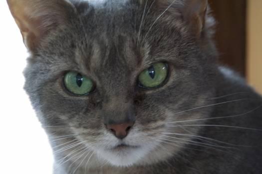 Cat Feline Animal #242362