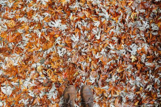 leaves autumn fall Free Photo