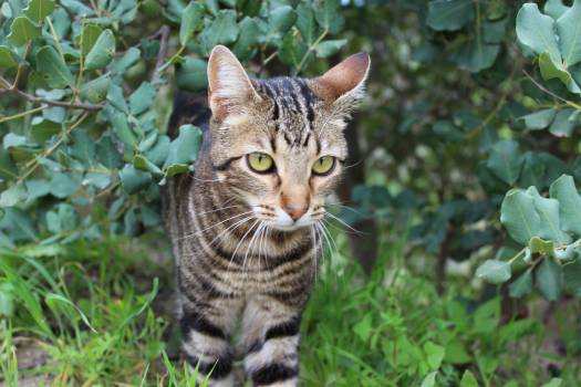 Cat Animal Feline #242561