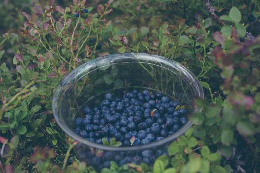 blueberries fruits healthy #24263