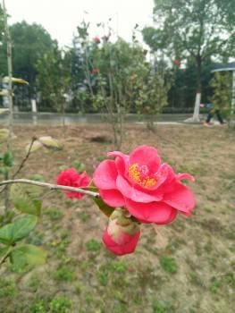 Flower Pink Plant #242844