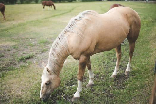 Grass Horse Field Free Photo