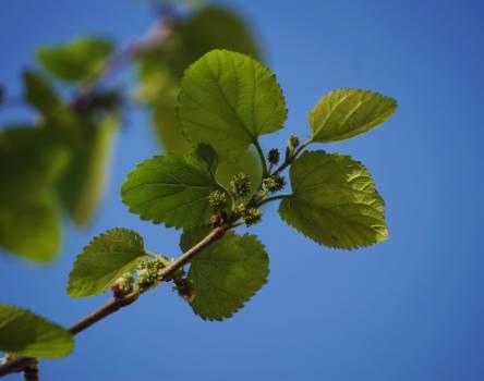 Leaf Plant Branch Free Photo