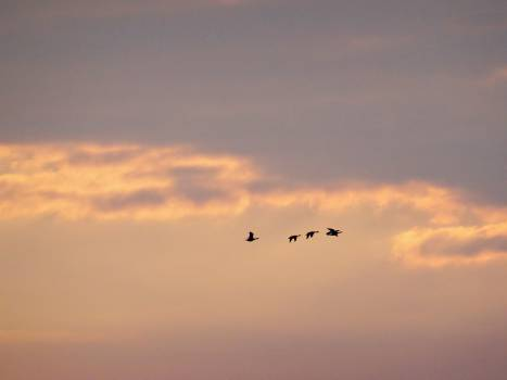 sunset sky clouds Free Photo