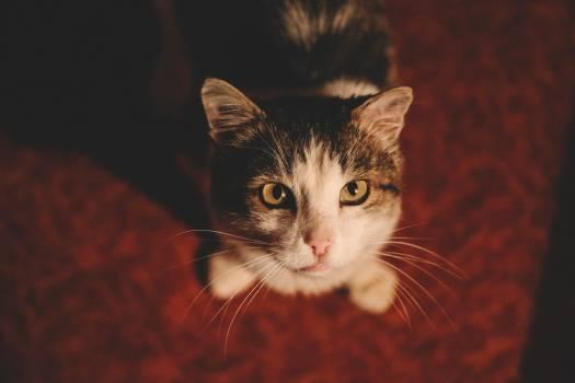 Kitten Cat Feline #243475