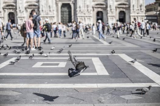birds pigeons animals Free Photo