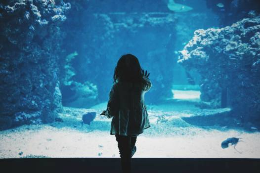Ocean Sea Underwater Free Photo