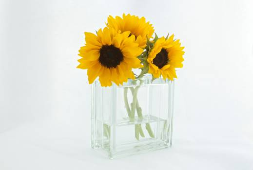 sunflowers vase decor Free Photo