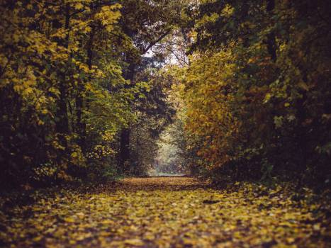 park forest woods #24414