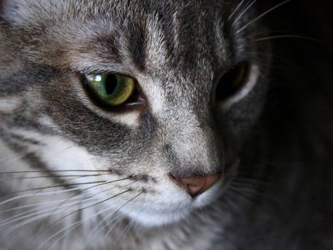 Cat Feline Animal #244287
