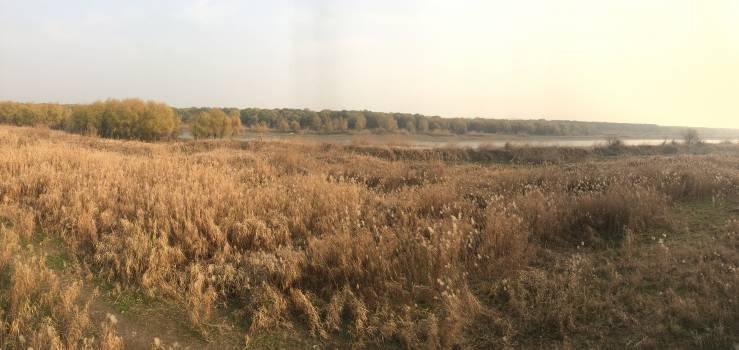 Wheat Field Hay Free Photo