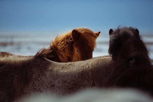 horses animals #24437