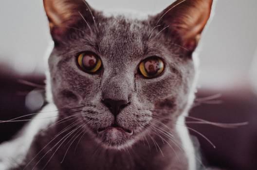 Cat Feline Animal #244586