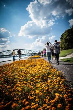 Sunflower Garden Flower #244765