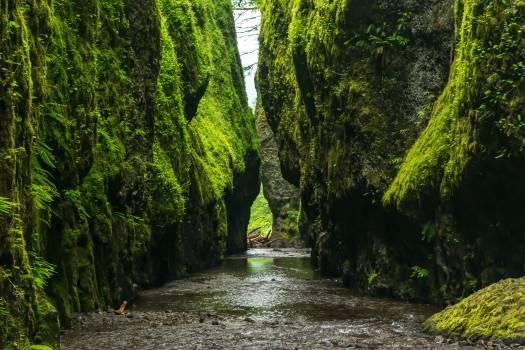 river stream water Free Photo