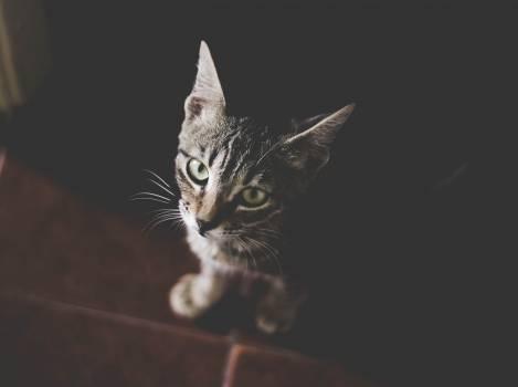 Cat Feline Animal #244925