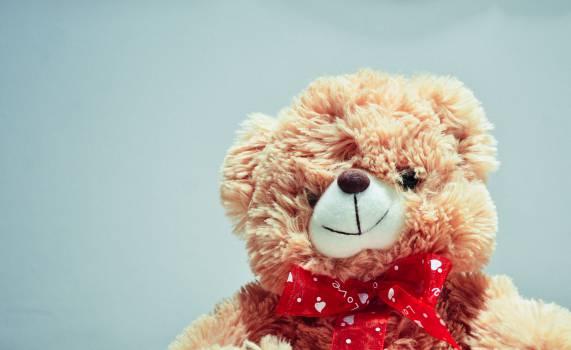 teddy bear stuffed animal toys Free Photo