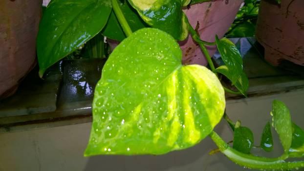 Citrus Edible fruit Fruit #245053