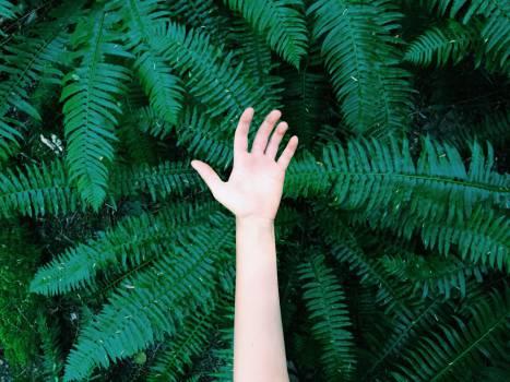 hand green trees Free Photo