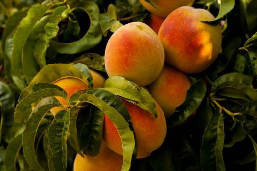 peaches fruits healthy #24535