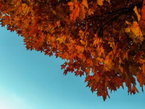 red orange leaves Free Photo