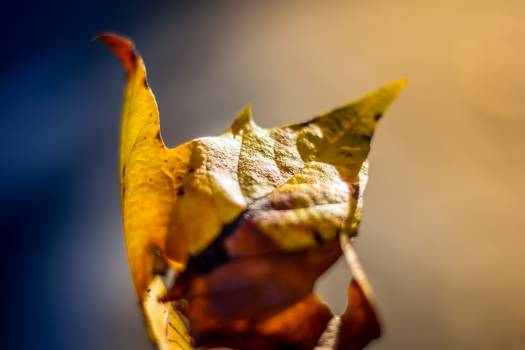 leaf fall autumn Free Photo