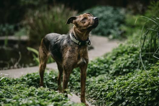Canine African hunting dog Wild dog #246214