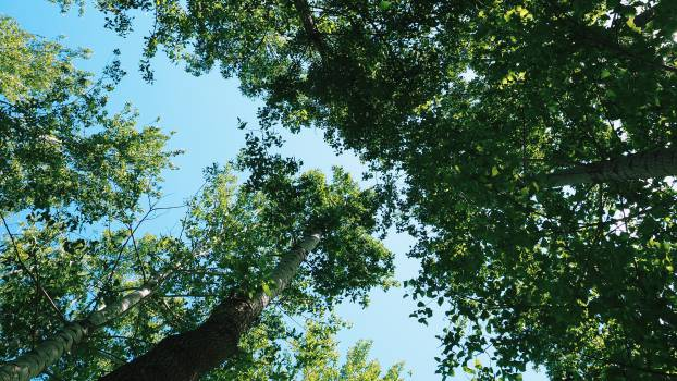trees leaves branches Free Photo