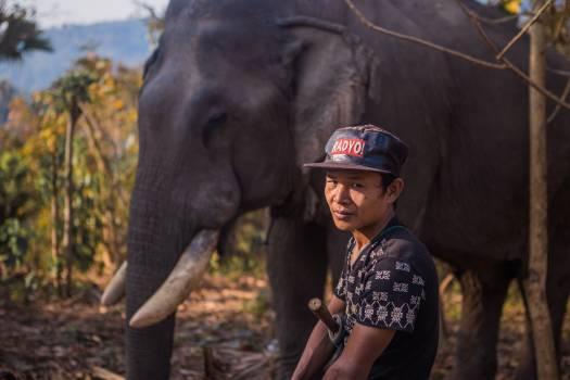 Mammal Elephant Tusker #246280