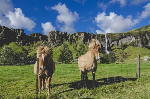 Horse Farm Horses Free Photo