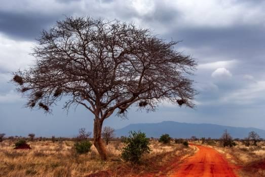 Tree Landscape Oak #246651