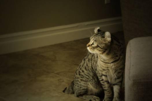 Cat Feline Domestic cat #246786