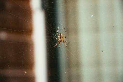 spider web insects #24705