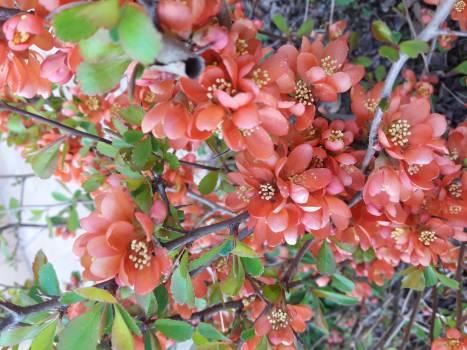 Shrub Leaf Berry #247176